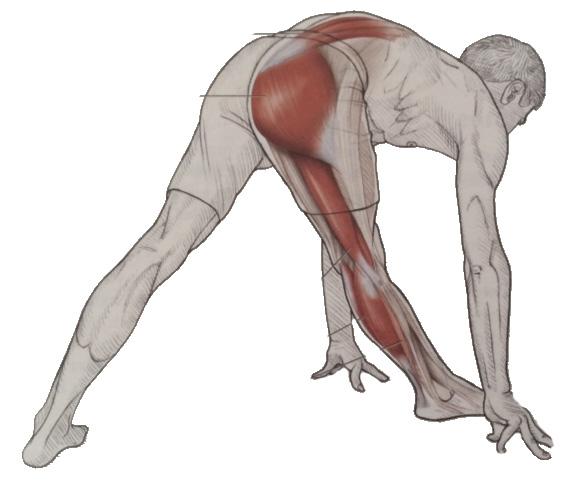 standing knee flexor stretch